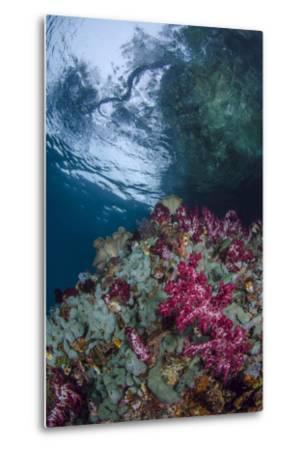 Indonesia, West Papua, Raja Ampat. Coral Reef Scenic-Jaynes Gallery-Metal Print