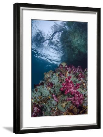 Indonesia, West Papua, Raja Ampat. Coral Reef Scenic-Jaynes Gallery-Framed Photographic Print