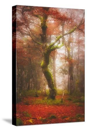 In the Mood of Autumn-Philippe Sainte-Laudy-Stretched Canvas Print