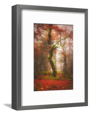 In the Mood of Autumn-Philippe Sainte-Laudy-Framed Photographic Print