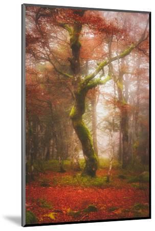In the Mood of Autumn-Philippe Sainte-Laudy-Mounted Photographic Print