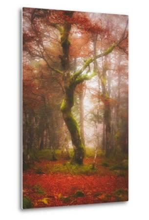 In the Mood of Autumn-Philippe Sainte-Laudy-Metal Print