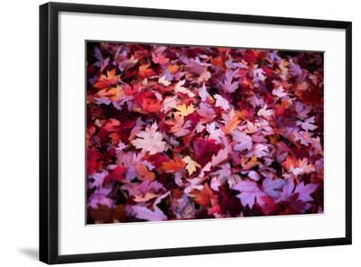 Leaves Carpet-Philippe Sainte-Laudy-Framed Photographic Print