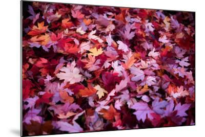 Leaves Carpet-Philippe Sainte-Laudy-Mounted Photographic Print