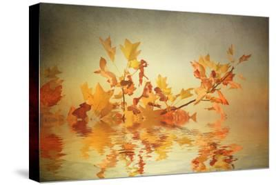 Rusty Fall Stripe-Philippe Sainte-Laudy-Stretched Canvas Print