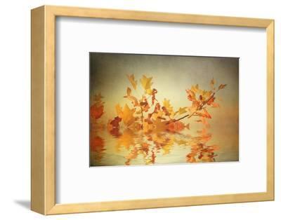 Rusty Fall Stripe-Philippe Sainte-Laudy-Framed Photographic Print