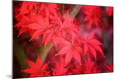 Red and Red-Philippe Sainte-Laudy-Mounted Photographic Print
