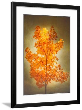 Textured Autumn-Philippe Sainte-Laudy-Framed Photographic Print