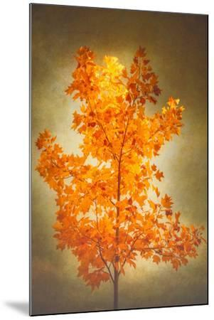 Textured Autumn-Philippe Sainte-Laudy-Mounted Photographic Print