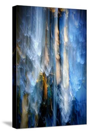 Evening Trees 1-Ursula Abresch-Stretched Canvas Print
