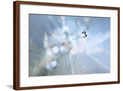 Seed Fireworks-Heidi Westum-Framed Photographic Print