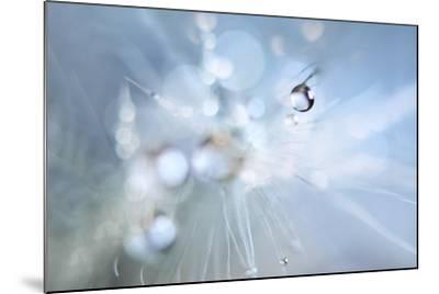 Seed Fireworks-Heidi Westum-Mounted Photographic Print