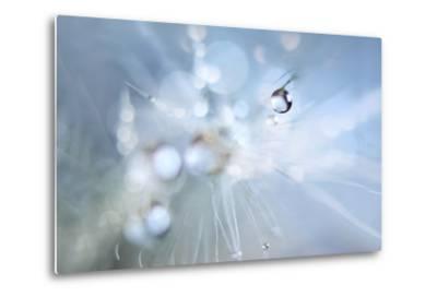 Seed Fireworks-Heidi Westum-Metal Print