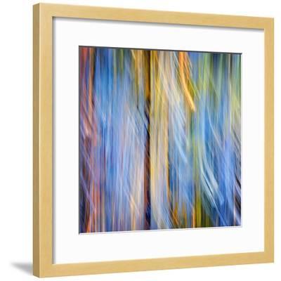 Pines-Ursula Abresch-Framed Photographic Print