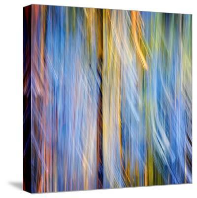 Pines-Ursula Abresch-Stretched Canvas Print