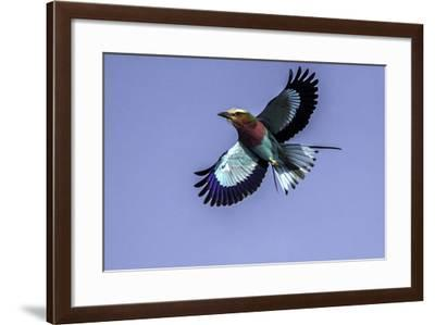 Soaring Above Tanzania-Art Wolfe-Framed Photographic Print