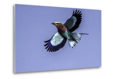 Soaring Above Tanzania-Art Wolfe-Metal Print