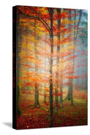 Autumn's End-Philippe Sainte-Laudy-Stretched Canvas Print