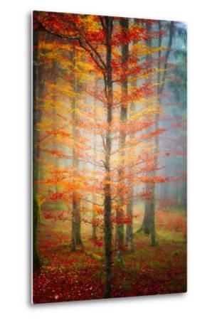 Autumn's End-Philippe Sainte-Laudy-Metal Print