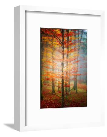 Autumn's End-Philippe Sainte-Laudy-Framed Photographic Print