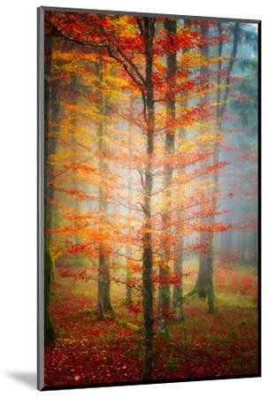 Autumn's End-Philippe Sainte-Laudy-Mounted Photographic Print