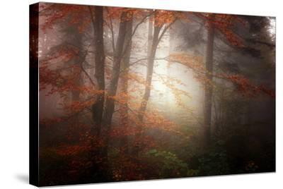 Forest Light-Philippe Sainte-Laudy-Stretched Canvas Print