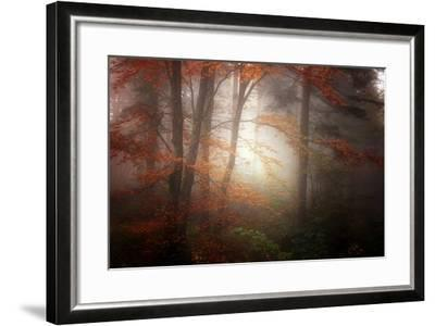 Forest Light-Philippe Sainte-Laudy-Framed Photographic Print