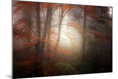 Forest Light-Philippe Sainte-Laudy-Mounted Photographic Print