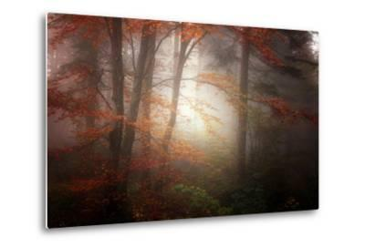 Forest Light-Philippe Sainte-Laudy-Metal Print