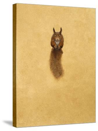 Leaping Red Squirrel-Tim Hayward-Stretched Canvas Print