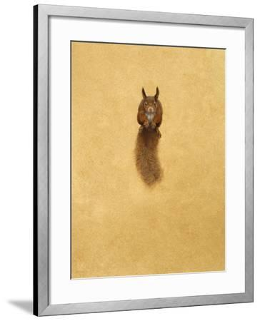 Leaping Red Squirrel-Tim Hayward-Framed Giclee Print