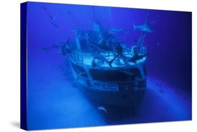 A Person on the Ray of Hope Shipwreck with Caribbean Reef Sharks, Carcharhinus Perezi, Circling-David Doubilet-Stretched Canvas Print