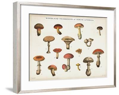 Mushroom Chart I light-Wild Apple Portfolio-Framed Art Print