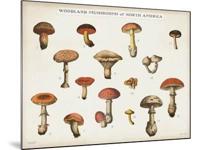 Mushroom Chart I light-Wild Apple Portfolio-Mounted Art Print