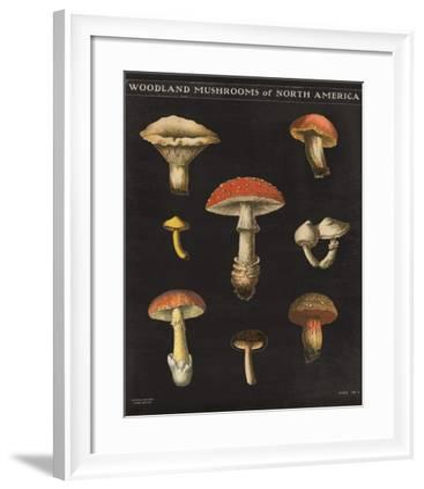 Mushroom Chart II-Wild Apple Portfolio-Framed Art Print