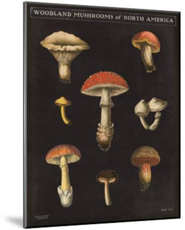 Mushroom Chart II-Wild Apple Portfolio-Mounted Art Print