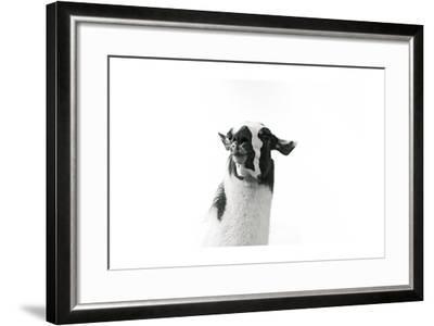 Lovable Llama I-Laura Marshall-Framed Art Print