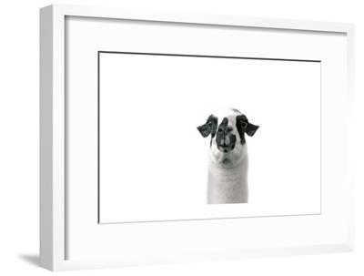 Lovable Llama II-Laura Marshall-Framed Premium Giclee Print