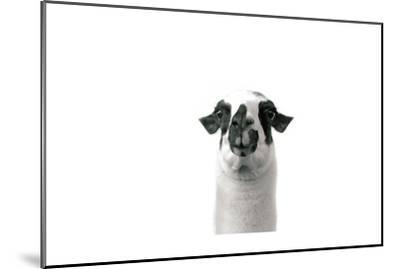 Lovable Llama II-Laura Marshall-Mounted Premium Giclee Print