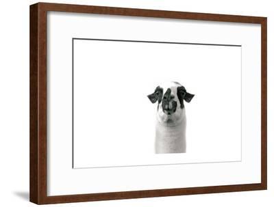 Lovable Llama II-Laura Marshall-Framed Art Print