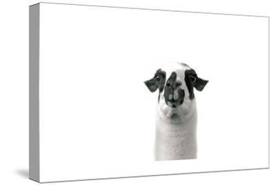 Lovable Llama II-Laura Marshall-Stretched Canvas Print