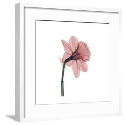 Veiled Blossom Coral--Framed Photographic Print