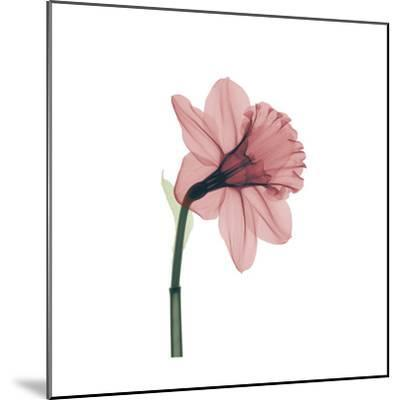 Veiled Blossom Coral--Mounted Photographic Print
