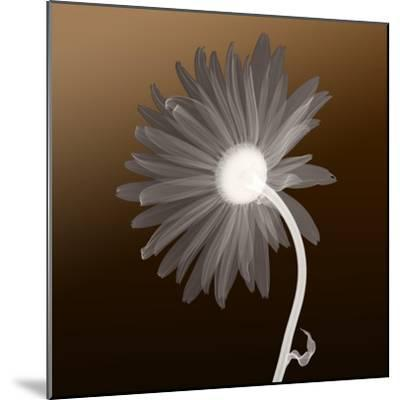 Sunburst Petals (Brown Background)--Mounted Photographic Print