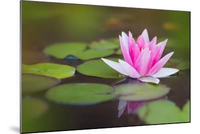 Beautiful Pink Water Lily and Leaves in Pond- Anyka-Mounted Photographic Print
