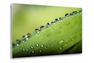 Macro Green Leaf with Water Drops-Carlo Amodeo-Metal Print