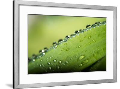 Macro Green Leaf with Water Drops-Carlo Amodeo-Framed Photographic Print