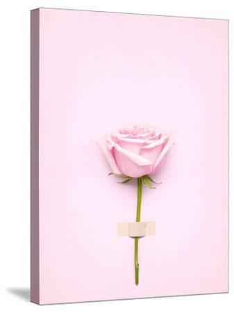Creative Valentines Day Still Life Concept, Pink Rose in Greeting Card on Pink Paper- Fisher Photostudio-Stretched Canvas Print