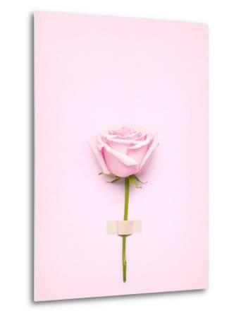 Creative Valentines Day Still Life Concept, Pink Rose in Greeting Card on Pink Paper- Fisher Photostudio-Metal Print