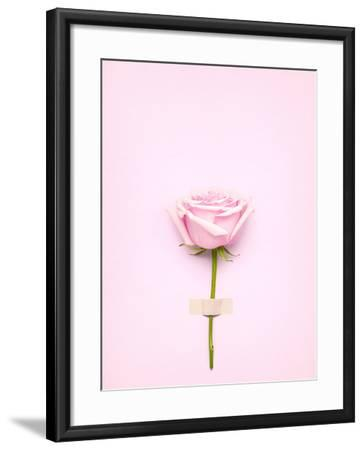 Creative Valentines Day Still Life Concept, Pink Rose in Greeting Card on Pink Paper- Fisher Photostudio-Framed Photographic Print